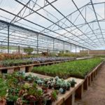 Commercial Greenhouse 1
